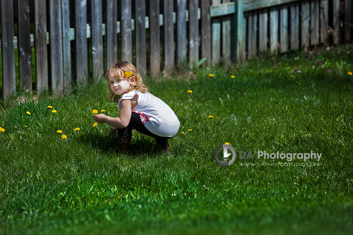 Little girl in spring picking up dandelions - Family Photo Session by DA Photography, www.daphotostudio.com, Sutton, ON