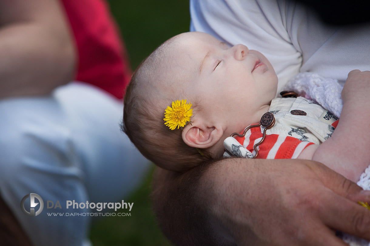 Newborn baby in spring with dandelion flower in her hair - Family Photo Session by DA Photography, www.daphotostudio.com, Sutton, ON